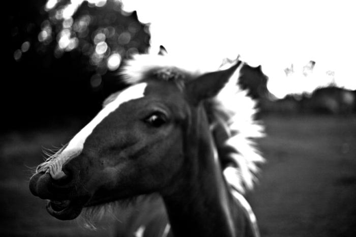pony_gms